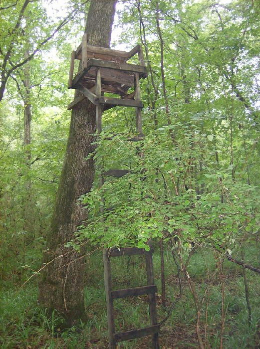 Hunting From A Treestand And Safety Treestand Safety